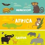 Los animales lindos fijaron el zorro de Fennec del camaleón del camello del mosca tse-tsé del loro del hipopótamo del toro del lé ilustración del vector