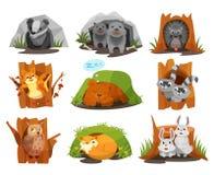 Los animales lindos que se sientan en madrigueras y huecos fijan, acosan, los cachorros de lobos, erizo, ardilla, cachorro de oso stock de ilustración