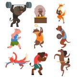 Los animales que hacen ejercicio en el gimnasio, la aptitud y la forma de vida sana vector ejemplos en un fondo blanco libre illustration
