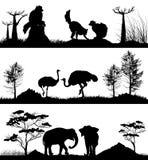 Los animales salvajes Anillo-ataron el lémur, elefante, avestruz Fotos de archivo libres de regalías