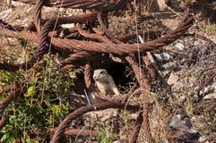 Los animales salvajes pueden extinto debido a la destrucción de hábitats naturales fotos de archivo libres de regalías