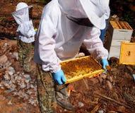 Los apicultores Foto de archivo