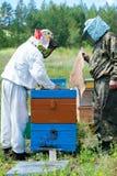 Los apicultores abren la colmena después de fumar Imagen de archivo