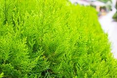 Los arbustos del verde Imágenes de archivo libres de regalías