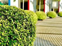 Los arbustos fueron admitidos un campus universitario en Sai Kung, Hong Kong Imagenes de archivo
