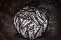 Los arenques frescos salados pescan en el barril de madera del roble, mariscos tradicionales foto de archivo libre de regalías