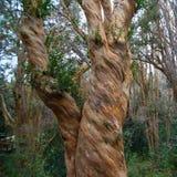 Los Arrayanes国家公园 免版税库存照片