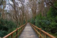 Los Arrayanes国家公园 免版税库存图片
