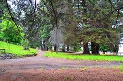 Los Arrayanes, nationalpark, Argentina Royaltyfri Bild