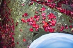 Los asiáticos masculinos del pie viajan se relajan en el día de fiesta Colocación en una hoja de arce en rojo Caído en el piso en fotografía de archivo libre de regalías