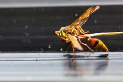 Los avispones, Imagen de archivo