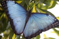 Los azules Imágenes de archivo libres de regalías