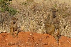 Los babuinos Imagenes de archivo