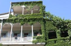 Los balcones de Tbilisi cubrieron con la enredadera Imágenes de archivo libres de regalías