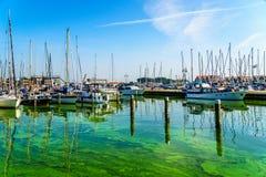 Los barcos de vela y los barcos de motor amarraron en una parte del puerto alcanzado por las algas Imagen de archivo