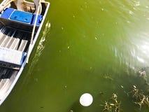 Los barcos y los catamaranes en un lago de la charca en un canal del río con agua florecida verde se amarran en la orilla foto de archivo libre de regalías