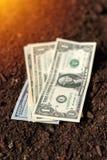 Los billetes de banco del dólar cobran el dinero en la tierra del suelo, renta en agricultur Fotografía de archivo libre de regalías