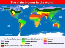 Los biomas principales en el mundo Imágenes de archivo libres de regalías
