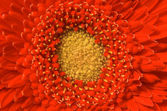 Los in bloem op stock afbeelding