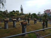 Los bonsais cultivan un huerto, ciudad de la película del ramoji, Hyderabad foto de archivo libre de regalías