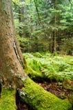 Los bosques mágicos Fotos de archivo libres de regalías