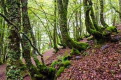 Los bosques mágicos Imagenes de archivo