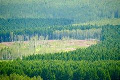 Los bosques y las flores Imagenes de archivo