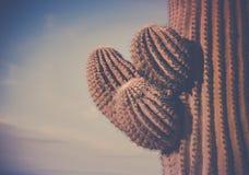 Los brazos del árbol de Actus del Saguaro abandonan Phoenix, AZ Imagen de archivo
