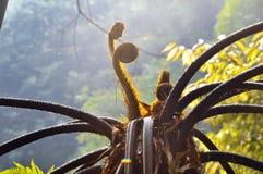 Los brotes de los helechos de árbol Imagen de archivo libre de regalías