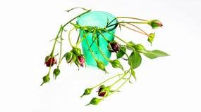 Los brotes de salvaje subieron en una rama en un vidrio verde en un fondo blanco Imagen de archivo