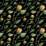 Los brotes inconsútiles de la acuarela del modelo acechan las hojas del girasol en un fondo del wight ilustración del vector