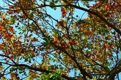 Los brunches coloridos de un árbol en ocasión de la primavera imágenes de archivo libres de regalías