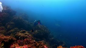 Los buceadores acercan al submarino del tiburón en el fondo del fondo del mar almacen de video