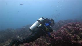 Los buceadores acercan al submarino del tiburón en el fondo del fondo del mar metrajes