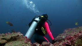 Los buceadores subacuáticos en el fondo de la escuela pescan en las Islas Galápagos almacen de video