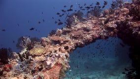 Los buceadores subacuáticos en el fondo de la escuela pescan en Maldivas almacen de metraje de vídeo