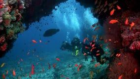 Los buceadores subacuáticos en el fondo de la escuela pescan en Maldivas metrajes