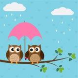 Los buhos se juntan bajo el paraguas Fotos de archivo libres de regalías
