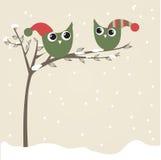 Los buhos se juntan en sombreros de la Navidad en la ramificación de árbol Fotografía de archivo libre de regalías