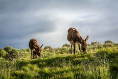 Los burros suben arriba foto de archivo libre de regalías