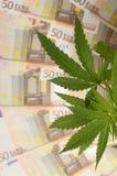Los cáñamos plantan y porción de cincuenta billetes de banco euro Imagen de archivo libre de regalías