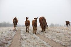 Los caballos fotografía de archivo libre de regalías