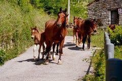 Los caballos agrupan con los potros Imágenes de archivo libres de regalías