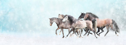 Los caballos corrientes reúnen, en nieve, la bandera del invierno