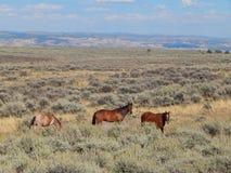 Los caballos de bronce de la belleza acercan al dinosaurio, Utah imagen de archivo