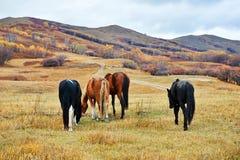 Los caballos de la consumición en el punto del paisaje de Beigou Imagenes de archivo