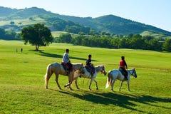 Los caballos de montar a caballo de la persona joven en el prado del verano Fotografía de archivo