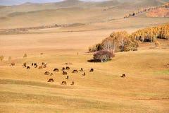 Los caballos en el pasto Fotos de archivo libres de regalías