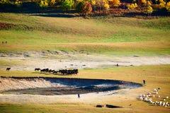 Los caballos en la pradera Imagen de archivo
