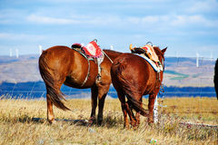 Los caballos en los prados del otoño Fotos de archivo libres de regalías
